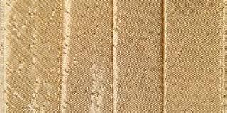 Wrights Bulk Buyingle Fold Lame inch Bias Tape 1/2 inch 4 Yards Gold 117-211-046 (3-Pack)