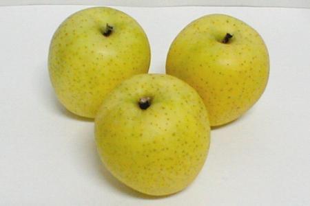 青森産 王林 CA貯蔵りんご 5kg 大玉14〜16個入り