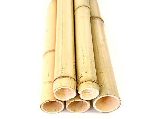 1x Bambusrohr gelb 180cm, Moso Bambus Gebleicht, Durch. 4,8-6cm zum BAU von Sichtschutzzäune aus Bambus