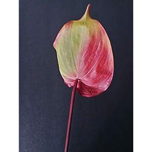 25″ Anthurium Stem. Silk Flower Floral Arrangements Tropical Hawaiian Flowers Blooms: 5″ Wide by 7″ Long – Artificial Flowers #FWB01YN