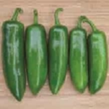 Pepper Sweet Specialty Tricked You 1,000 seeds