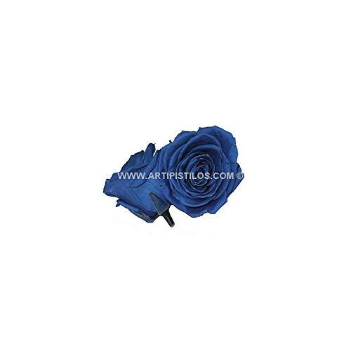 Behoud Grote Roos 9 Cms. - 9 X 6 Cms, Champagne - Bewaarde bloemen