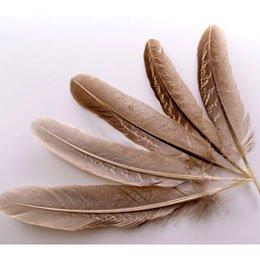装飾 ディスプレイ【カマタック】装飾用の羽根 キジ ホロホロ鳥(ブラウン)5枚セット【正規品】フェザー 羽 羽根