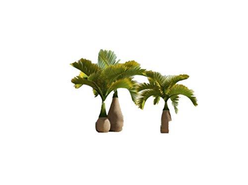 KINGDUO 20 Pcs Bouteille Palm Graines Bonsai Tropical Ornemental Arbre Plante Les Graines Jardin Exotique Plantation-Vert