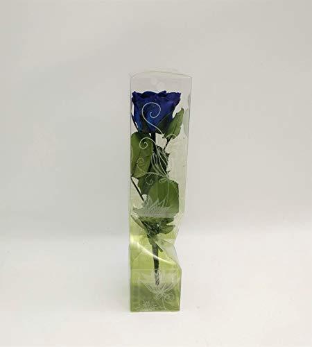 Floréate Rosa eterna preservada Azul Royal de 25 cm