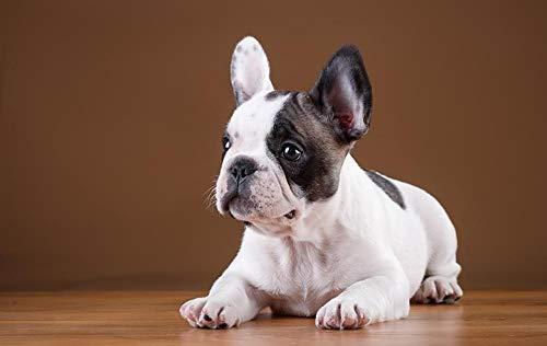 Lsping Puzzle Marvel 1000 Piezas Perros-Bulldog Frances 50x70cm