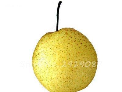 5 Pcs chinois poire Graines de sable blanc poire juteuse charnues fruits doux et délicieux vert sain nourriture savoureuse Bonne jardin des plantes 3