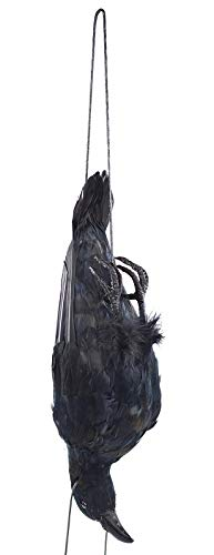 Etistta 17 inch Realistic Hanging Dead Crows Decoy Lifesize Extra Large Black Feathered Crow
