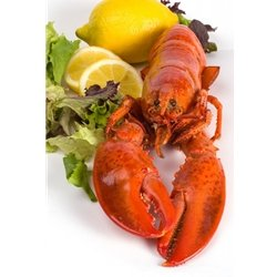 1 and 1/8 lb Live Maine Lobster -- Pack of 4
