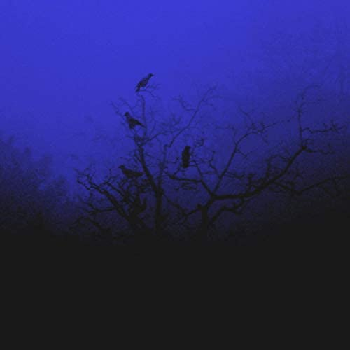 Corvus Covina