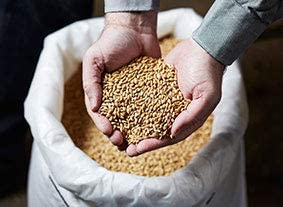 Lafood® Sauer – Mortero para cerveza – 0,450 kg al vacío