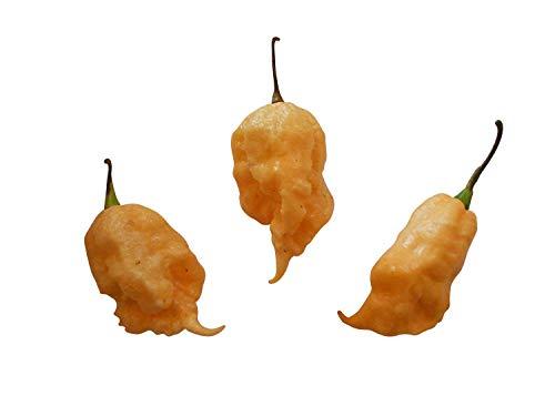Jay\'s Peach Ghost Scorpion -Ultrascharfe pfirsichfarbene Super Hot Chili- Sehr Selten