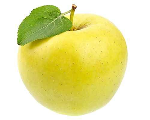 Malus Domestica Golden Delicious 130 cm / 5 Liter Topf- Apfelbaum - Halbstamm - Topfgewachsen - Apfel Golden Delicious