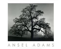 Art Poster Print - Oak Tree-Sunset City - Artist: Ansel Adams - Poster Size: 30 X 24 inches by POSTERHOUND