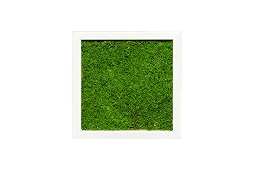 Moosbild Pflanzenbild Wandbild mit Flachmoos, versch. Maße günstig (100{124e27588834de7babaa314b24225d02bb7082f537b54ea41abbd541fa456225} Flachmoos) (Weiß, 25x25 cm)
