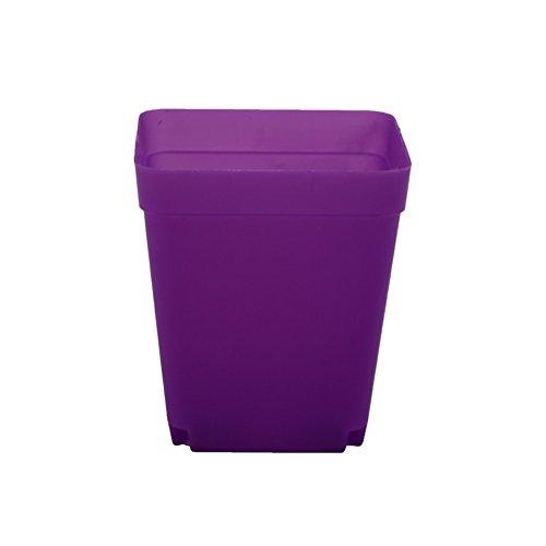 Adhere To Fly Lot de 10 pots de fleurs carrés en plastique pour plantes succulentes 6 cm Violet