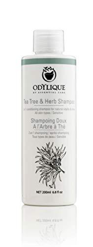 Odylique Naturkosmetik Teebaum und Kräuter Shampoo – Sanftes Bio Shampoo ohne Silikone und Sulfate 200ml
