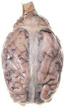 Best dura mater sheep brain Reviews