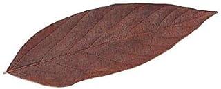 Vermont ヴェルモント ベルベットリーフ 100枚 ブラウン 02066