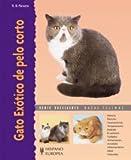 Gato Exótico de pelo corto (Excellence)