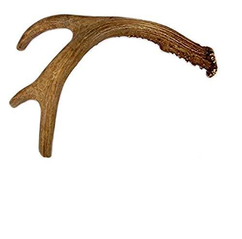 Astas de Ciervo Antlers XXL (231-325g)