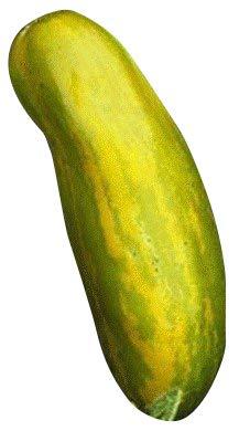 **Eine der schönsten Tomaten** -Green Sausage- 10 Samen **Absolute Rarität**