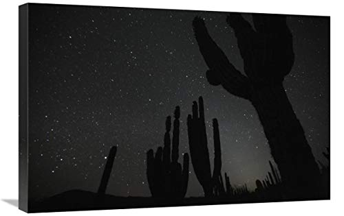 Global Gallery Cardon Cacti by Night with Stars, EL Vizcaino Biosphere Reserve, Mexico. Sequence 2 of 2-Canvas Art-30'x20'
