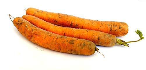 Frische Karotten Speisekarotten gelbe Rüben naturbelassen 1- 10 KG (1)
