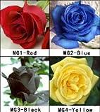 Portal Cool 1 Paquete de 4 Colores 80 Semillas Semillas Color de Rosa Rojo Amarillo Azul Negro Rose para su Amante