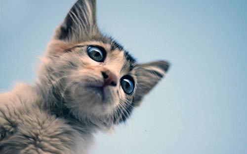 JRGGPO 5D-DIY-Kit De Pintura De Diamantes Pet Cat Picture Bordado De Punto De Cruz Pintura De Diamantes Patrón Artesanal Hecho A Mano De Cristal De Diamantes De Imitación Mosaico Decoración De Arte D