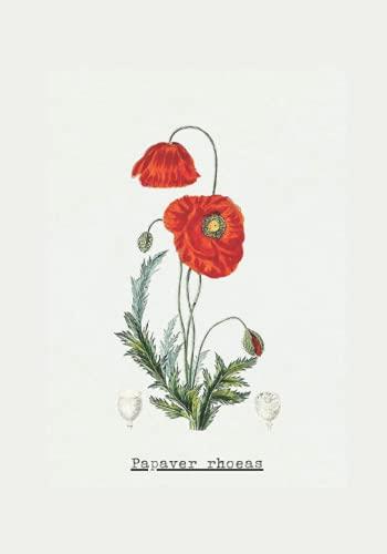 Papaver rhoeas, Poppy vintage botanical illustration notebook: illustration, garden, flower