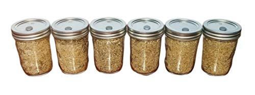 6 Jars BRF PF Tek Brown Rice Flour Mushroom Substrate - Half Pint Jars with Injectable Ports