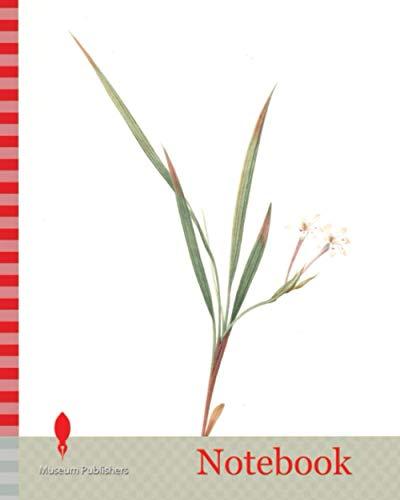 Notebook: Gladiolus inclinatus, Babiana tubiflora, Glaïeul incliné, Long-tubed Babiana, Redouté, Pierre Joseph, 1759-1840, les liliacees, 1802 - 1816