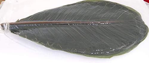 中国産 青朴葉 ( M ) 20枚×10P  ( 枚長さ30-34cm×幅17-19�p ) 料理演出等にも 業務用