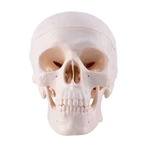 TINKSKY 頭蓋骨 ハロウィン スカル ドクロ 雰囲気作り 飾り 装飾 置物 小道具