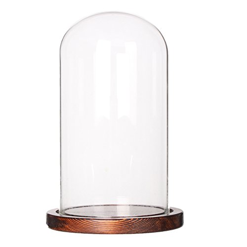 Moonlear Glass Display Dome Cloche Tabletop Display Case (Cofee Wood Base, Dia3.9 x H7)
