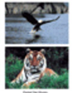 Wild Animal Poster Set by Stages Learning Materials