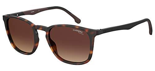 Carrera Gafas de Sol 8041/S Dark Havana/Brown Shaded 53/20/145 hombre