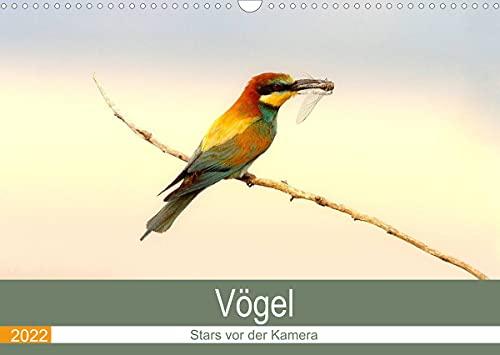 Vögel Stars vor der Kamera (Wandkalender 2022 DIN A3 quer)