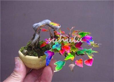 SEEDSOWN Rare Mini colorés Graines 50 Pcs/Mixed Bag Costume Pot Bonsaï pour Bricolage Jardin Japonais So Cute Cadeau pour Les Enfants