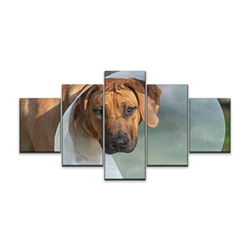 XEPPO 5 Panels Wall Art Print On Canvas Young Rhodesian Ridgeback with Recovery Collar Smell Flowers Dog Modern Abstract Picture Poster for Home Decor Stretched and Framed Ready to Hang (60''Wx32''H)