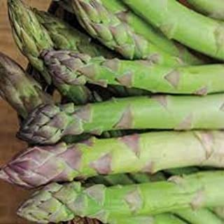 Jersey Supreme Asparagus Plants Crowns Roots Bare Root 500 Ea All Male