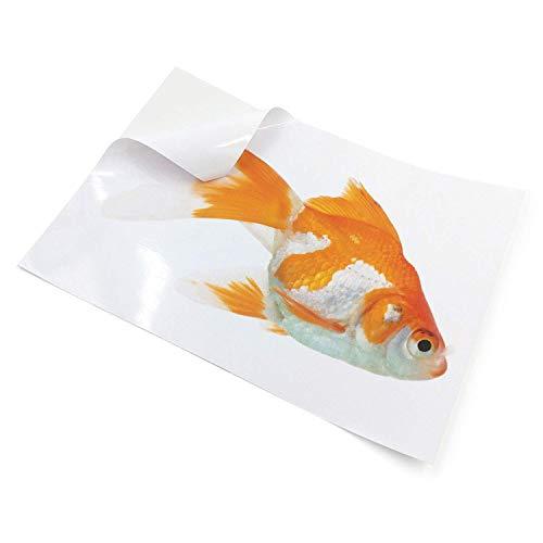 10 láminas autoadhesivas satinadas de vinilo (PVC), A4, aptas para impresoras láser, resistentes al agua, de gran calidad, color blanco