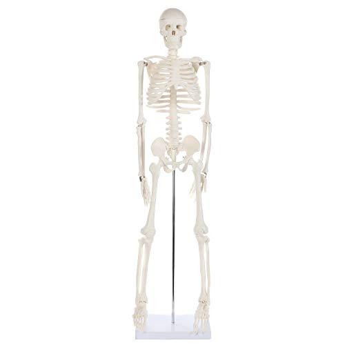 Anatomy Lab Human Skeleton Model, 34' Mini Skeleton Replica Mounted to Base for Display, with...