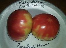 Graines allemand Bicolor tomate Mary Robinson - Charge de fruits énorme! PEIGNE. S/H