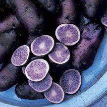 ShopMeeko Semillas: una bolsa de 200pcs * Plantas de patata violeta Plantas de legumbres Bonsai Nutrición del arco iris para jardín plantación de plantas raras Semilla: Clear