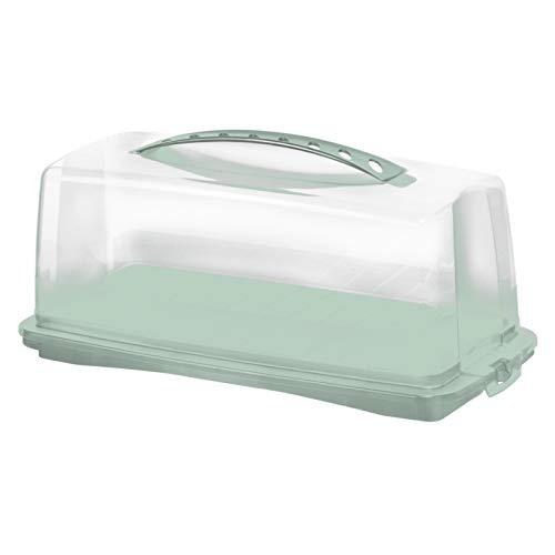Rotho Fresh Recipiente para Pasteles con Capucha y Asa de Transporte, Plástico (PP) sin BPA, Turquesa/Transparente, 36.0 x 16.5 x 16.5 cm