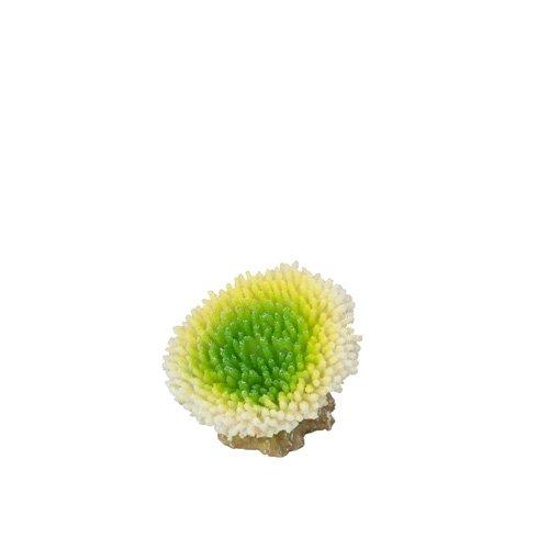 Aqua Della Aquariumdekoration Coral Acropora, Lime
