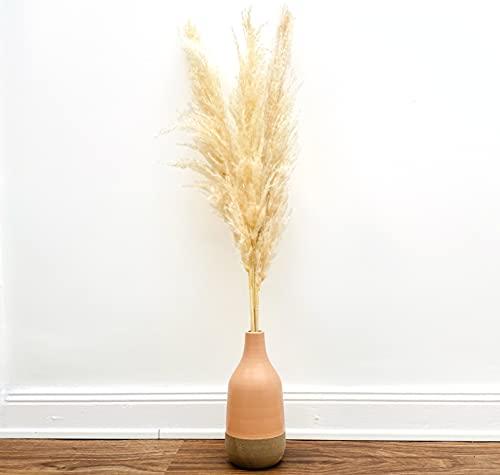 Cortaderia selloana - Juego de 3 plantas decorativas (110 cm de largo, aprox. 40 cm de largo, flores naturales secas), color beige natural