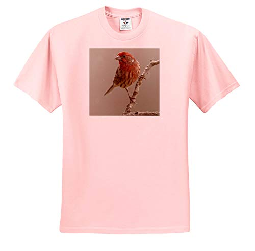 3dRose Danita Delimont - Birds - Male House Finch in Winter. - Adult Light-Pink-T-Shirt Small (ts_345307_34)